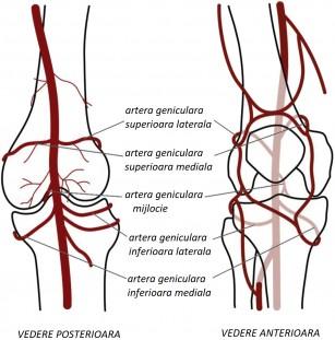 Injecțiile de tratament a genunchiului