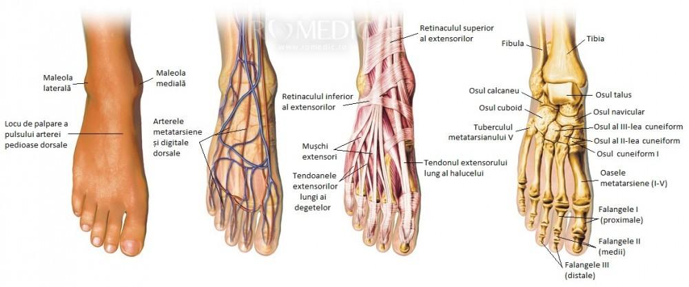tratamentul mușchilor articulațiilor și picioarelor)