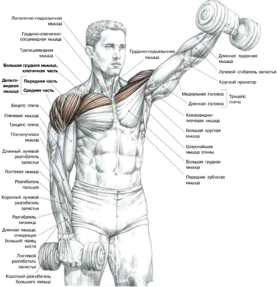 articulațiile brațelor în umeri doare ce să facă