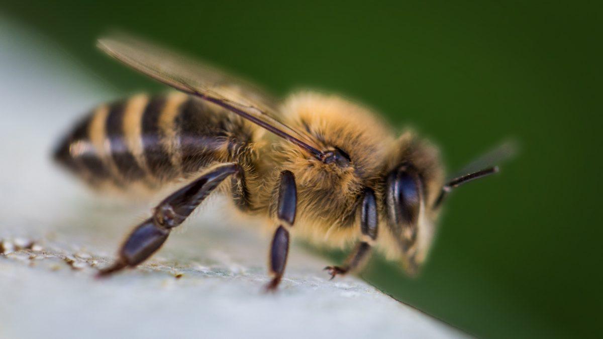 artroza tratament pentru intepatura albinelor