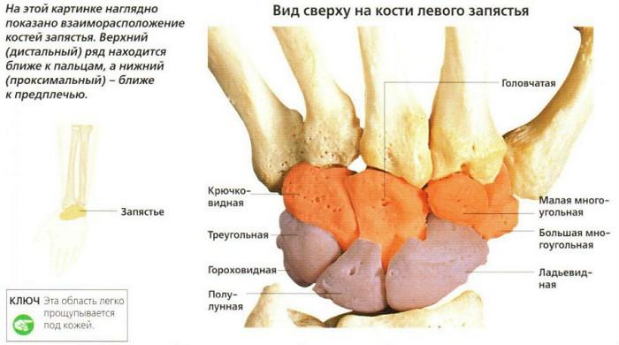 deteriorarea oaselor și a articulațiilor membrului superior