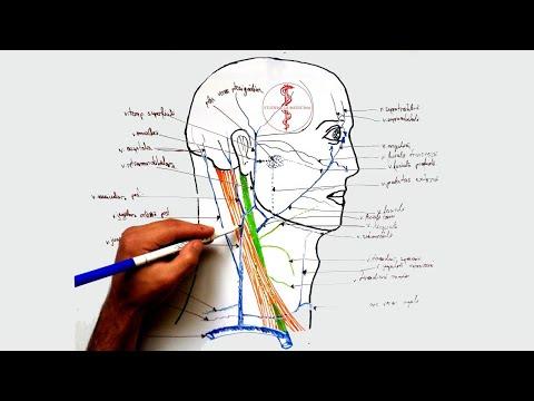 articulațiile rănesc capul să se întoarcă)