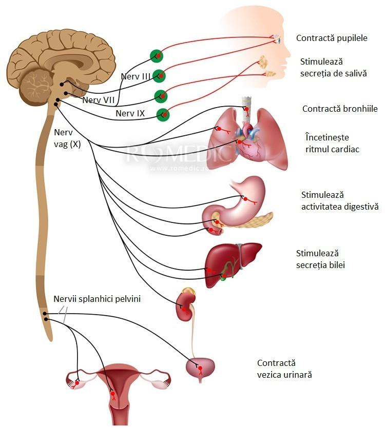 boli ale sistemului nervos și articulațiilor