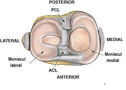 Articulatia genunchiului Mijloace pentru articulația genunchiului