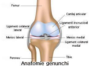 inflamația cartilajului genunchiului