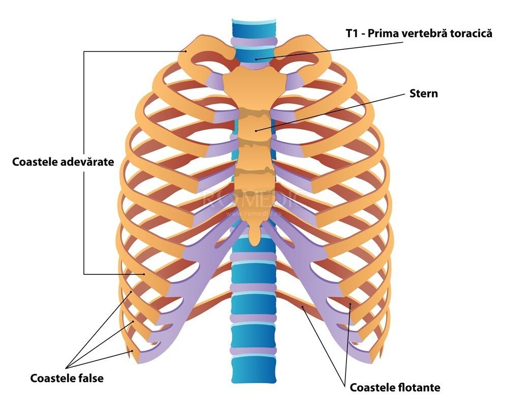 Dacă articulația din stern doare, Dureri de spate în stern ce să facă