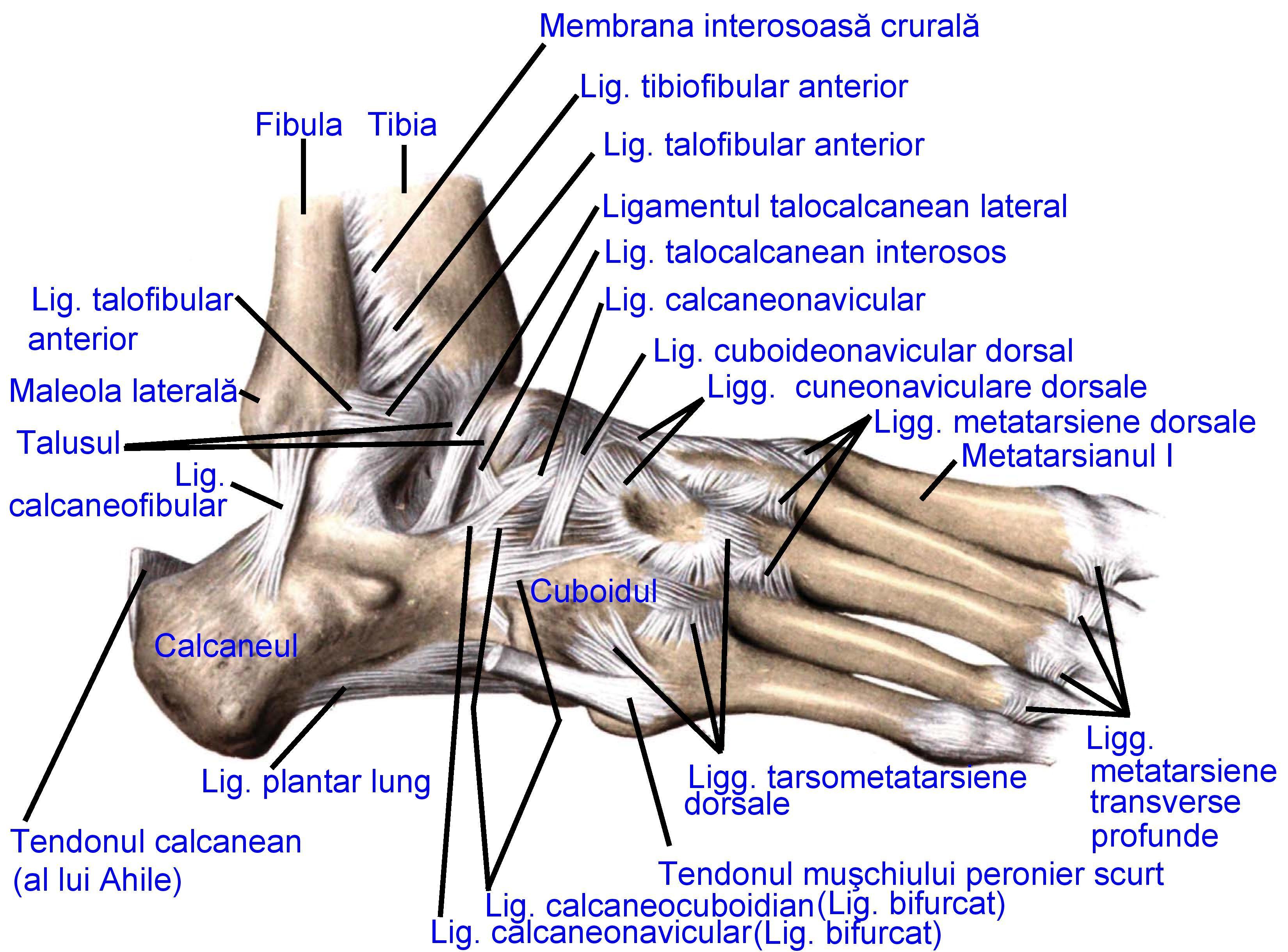 Articulația picioarelor foarte dureroasă - studioharry.ro