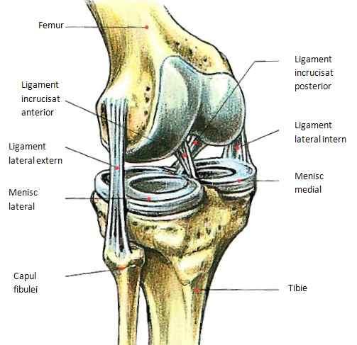 tratamentul rupturii ligamentelor în articulația genunchiului artrita simptomelor articulațiilor genunchiului