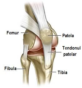 o articulație în genunchi)