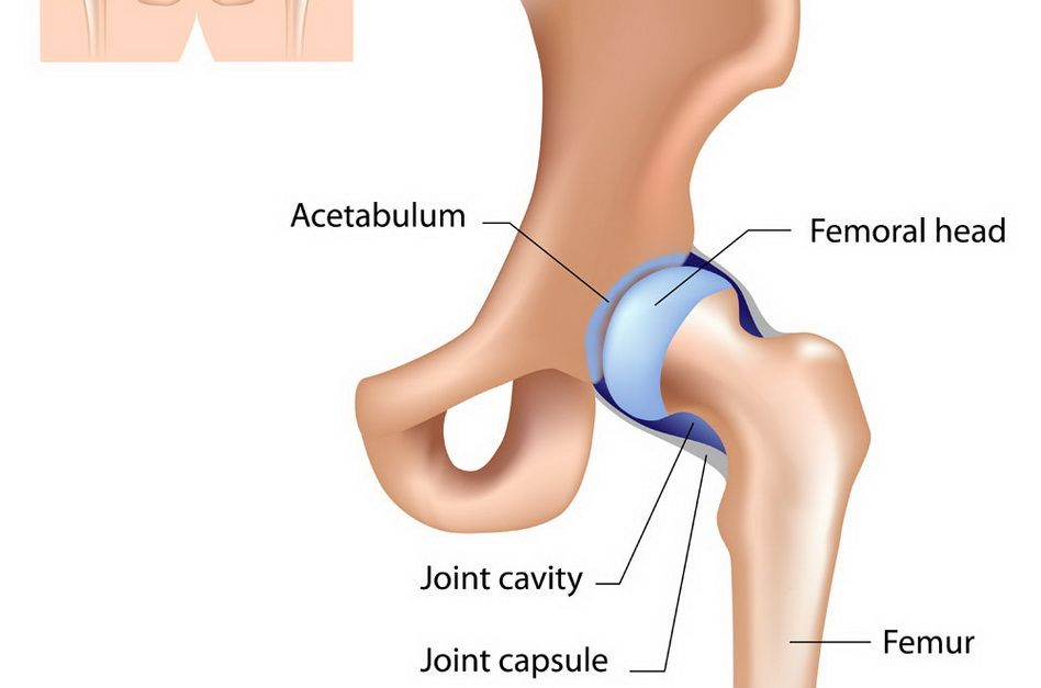 dureri la nivelul articulațiilor șoldului și coadă posterioară)