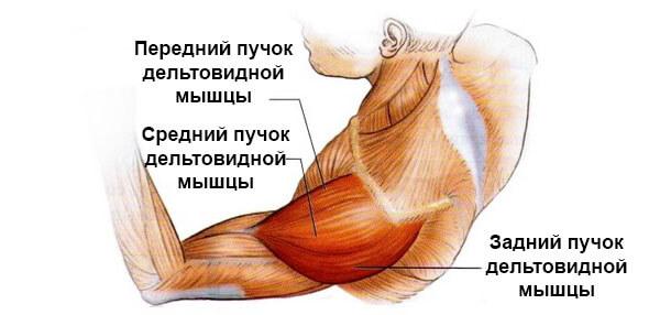 toți mușchii și articulațiile rănesc tratamentul)