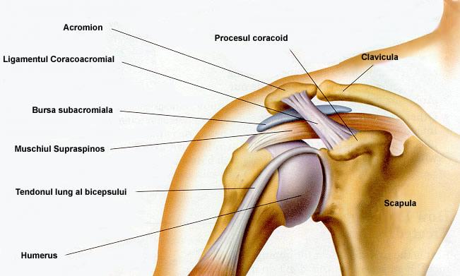 umflarea articulației umărului cum să tratezi)
