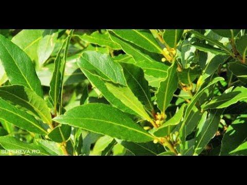 plante medicinale pentru tratamentul articulațiilor