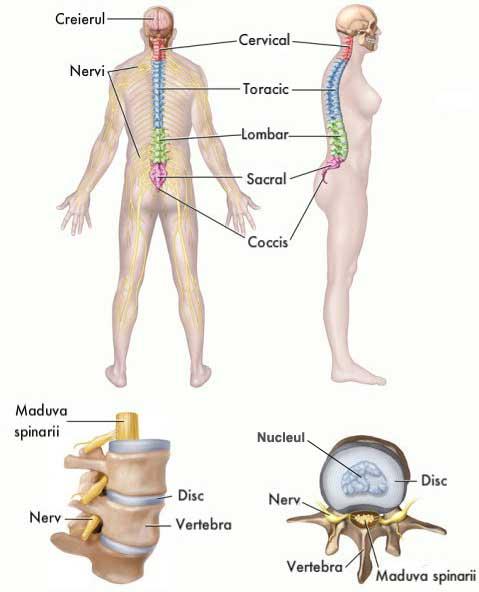 caise uscate pentru dureri articulare