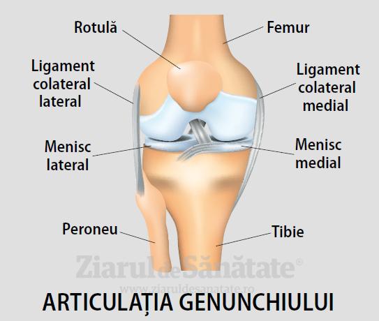 articulația de tăiere a genunchiului