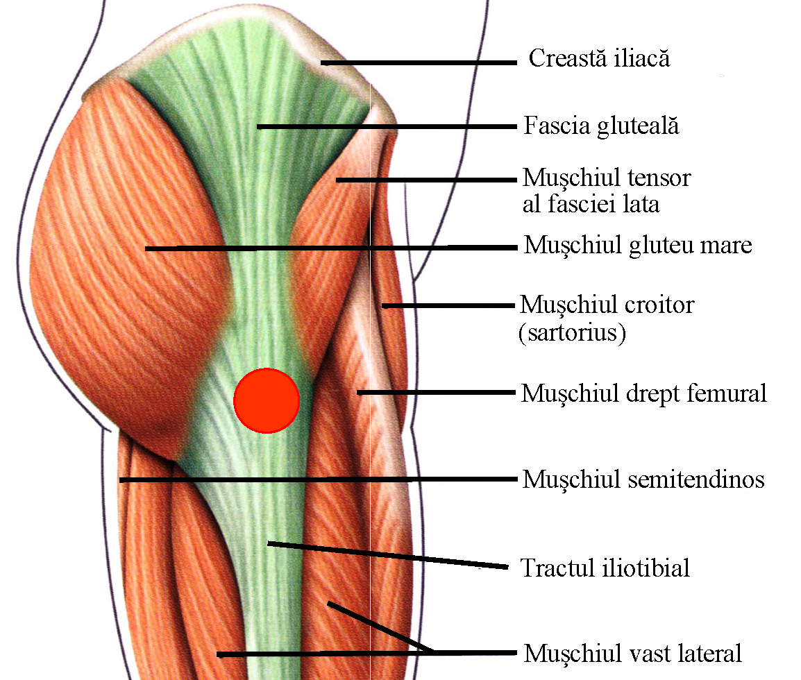 RMN articulației șoldului