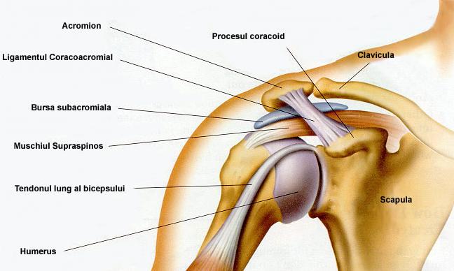 desenând dureri în articulația umărului stâng)