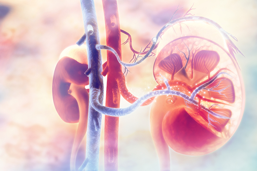 rinichii și articulațiile doare)