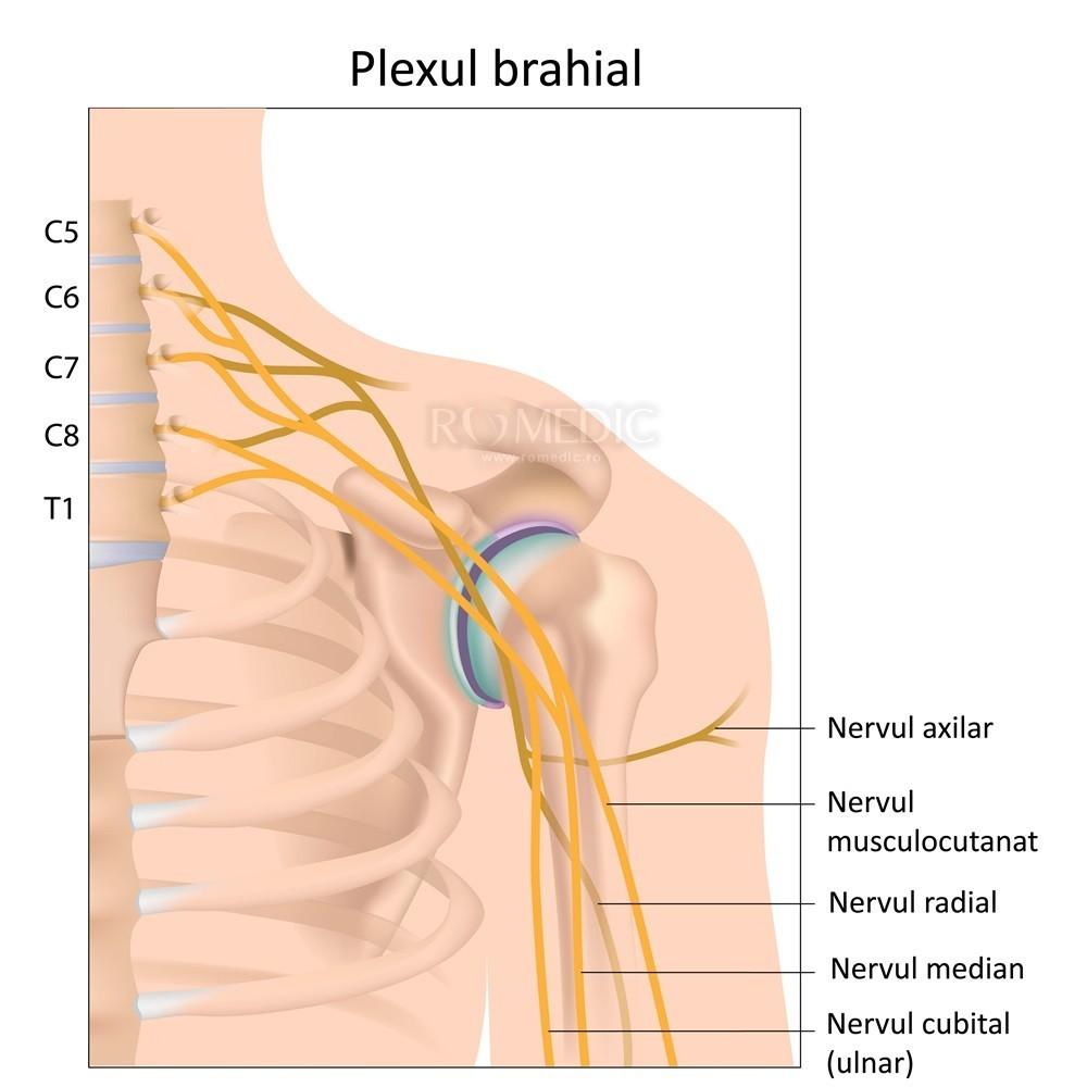 neurita articulației umărului și tratamentul acesteia durere în brațe și articulații