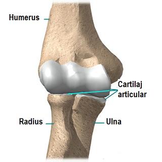 Cauzele edemului articulației cotului - Edemul articulației cotului: cauze, simptome și tratament
