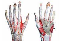 mâna dureroasă în articulația mâinii