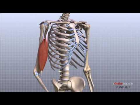 tratamentul creak al articulațiilor