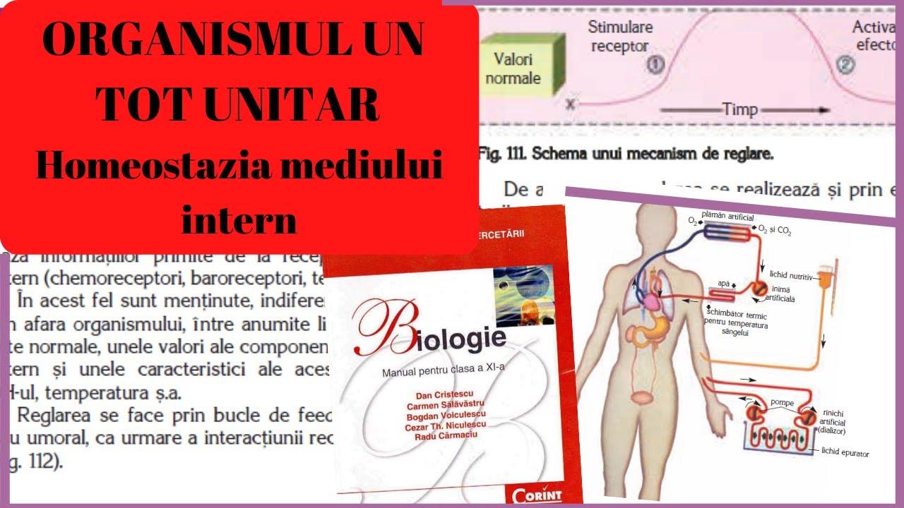 țesutul cartilaginos se referă la țesutul conjunctiv