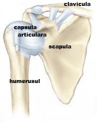 dureri de umăr la nivelul articulației)