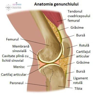 cum arată articulațiile genunchiului