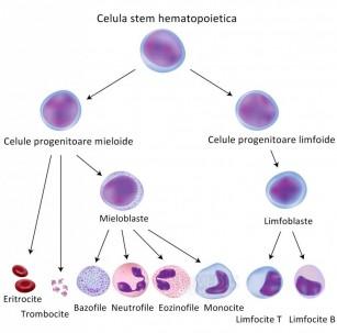 Tratamentul cu celule stem a articulațiilor false