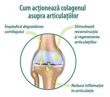 stimulând regenerarea cartilajului