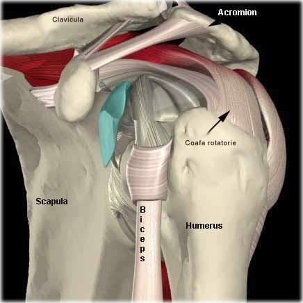 durere de tragere în articulația umărului
