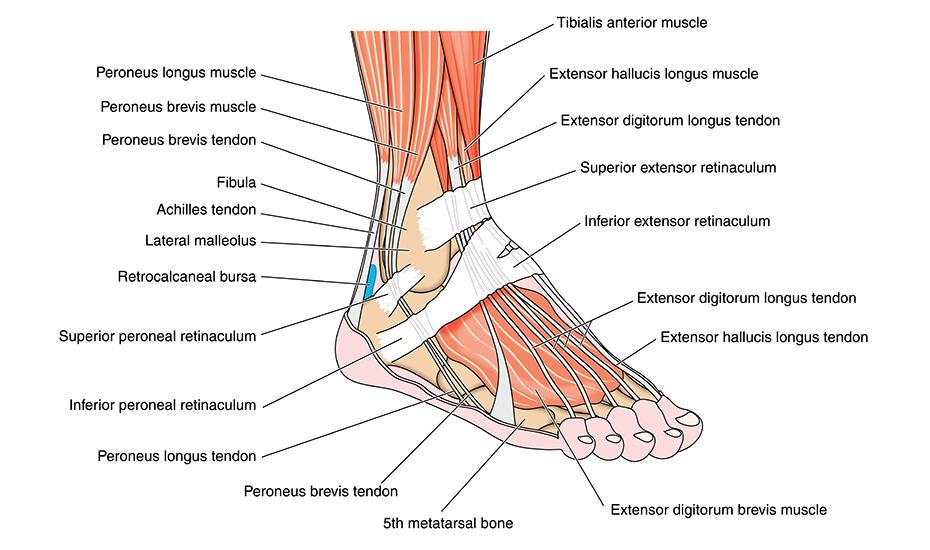 durere severă a articulației gleznei)