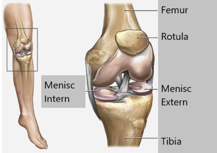ce dureri sunt în meniscul genunchiului)