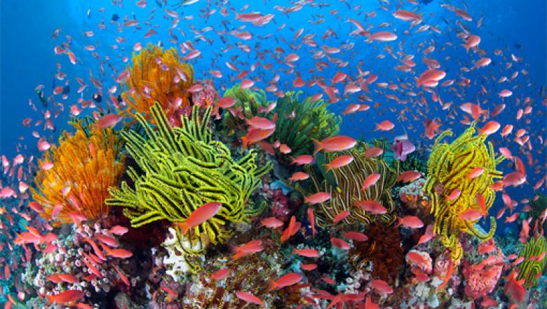 pregătirile comune ale clubului de corali tratamente conservatoare pentru artroza umărului