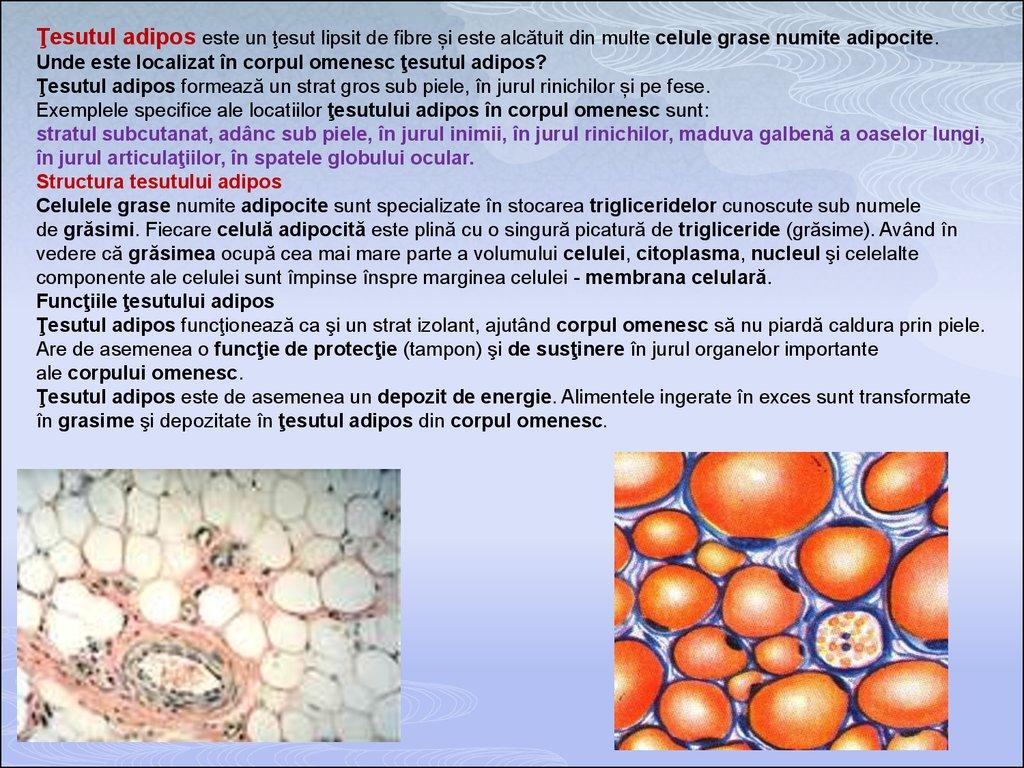 cartilajul este reprezentat de țesutul conjunctiv)