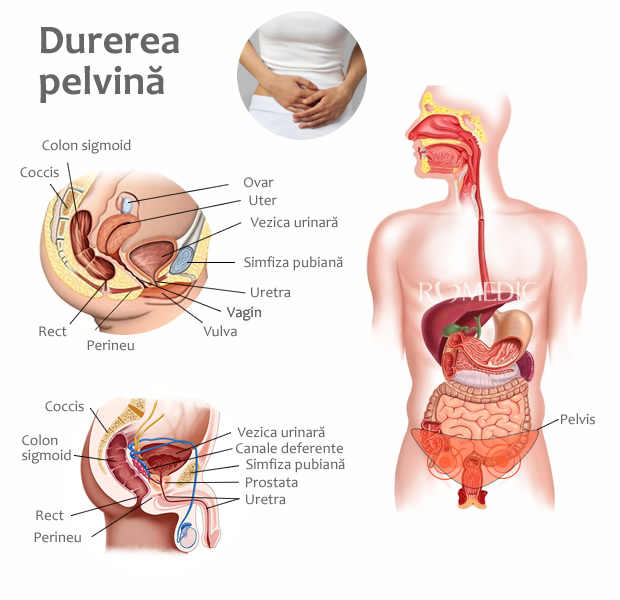 articulații și dureri perineale)