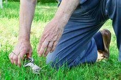 artroza genunchiului shiatsu)