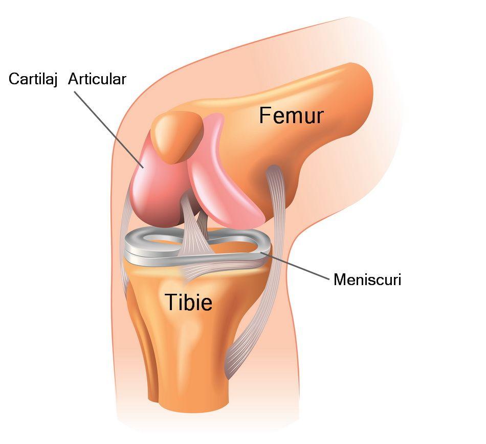 articulația genunchiului după înlocuirea durerii
