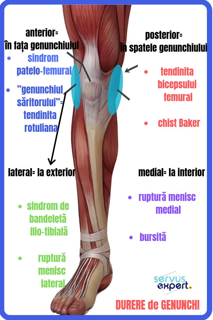 articulație lângă genunchi doare