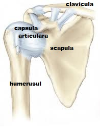 artrita bratului drept al umarului