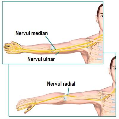 boli ale nervului articulației cotului
