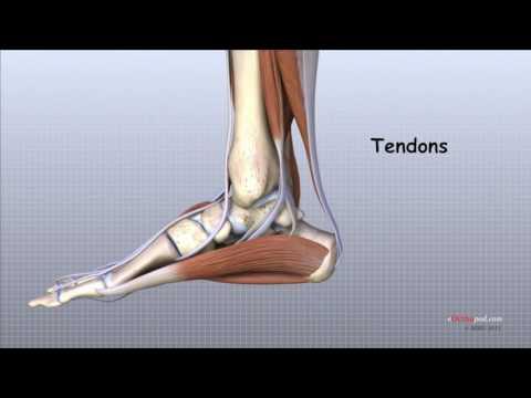 Degetele De La, Picioarele rănesc articulațiile