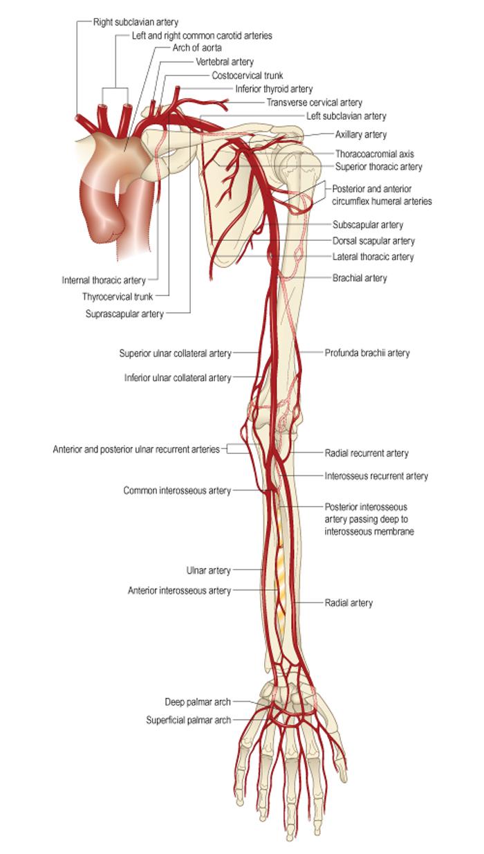 Tratamentul osteomului articulației umărului, Tratamentul osteomului articulației șoldului