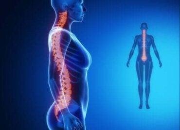 hrana pentru tratamentul coloanei vertebrale și a articulațiilor)