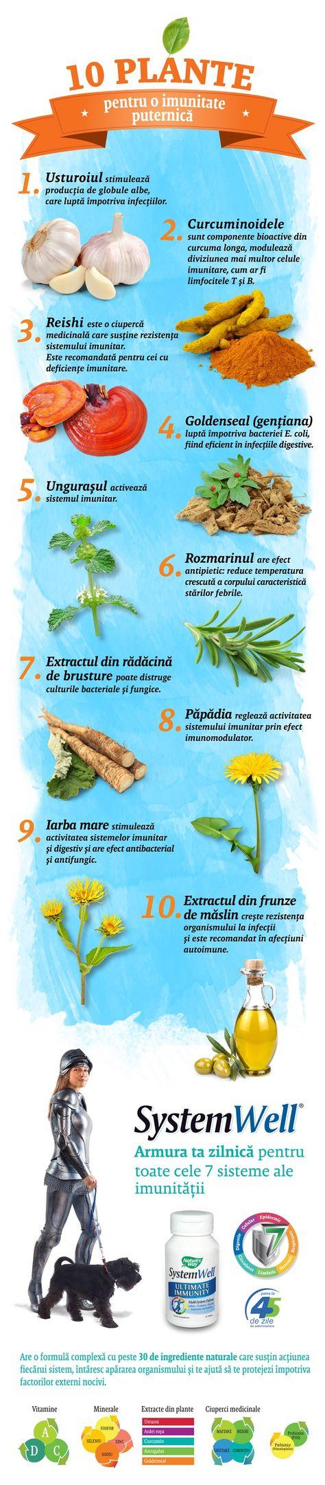 plante medicinale pentru tratarea oaselor și articulațiilor