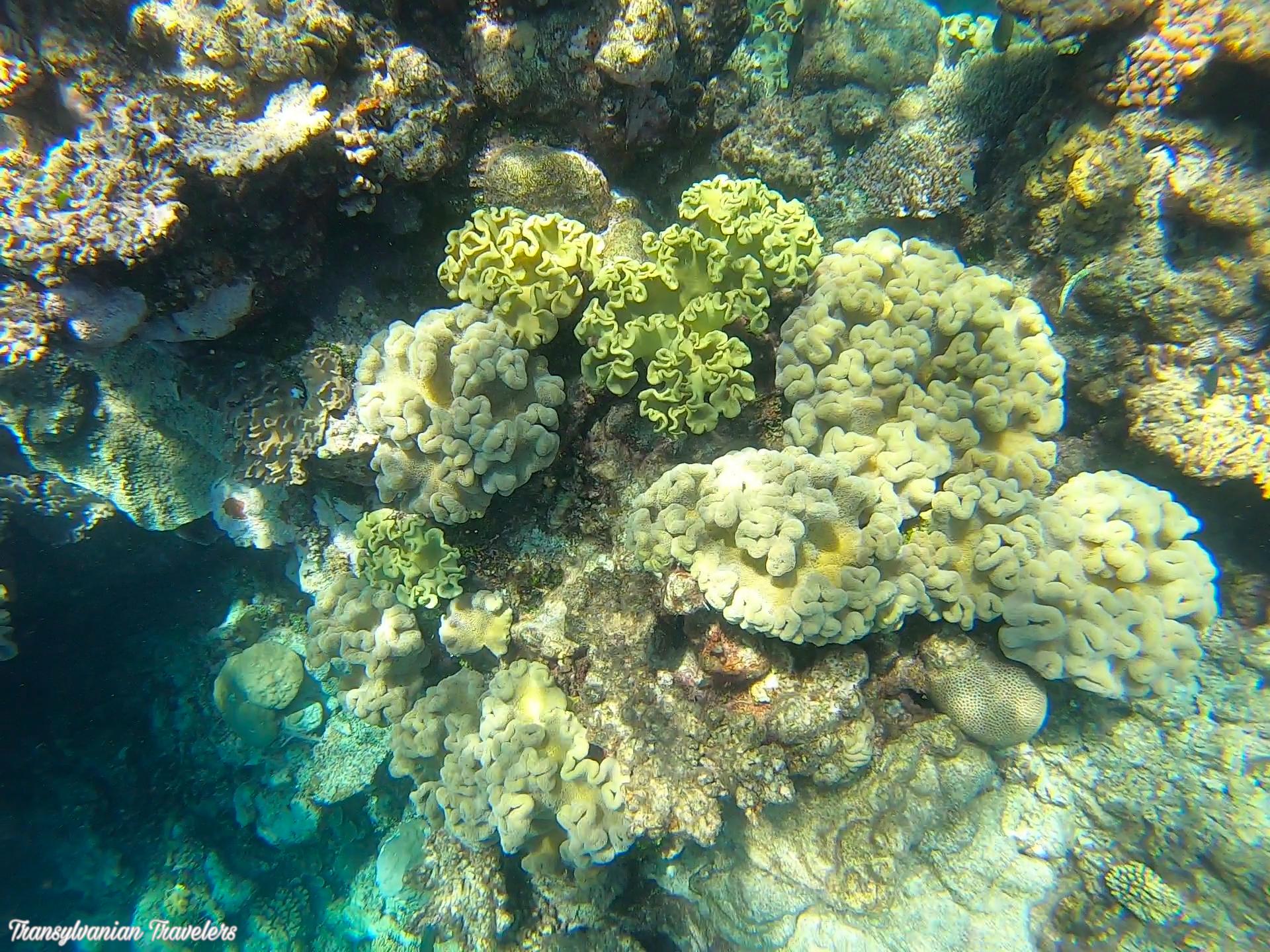 pregătirile comune ale clubului de corali articulațiile și mușchii doare ce să facă