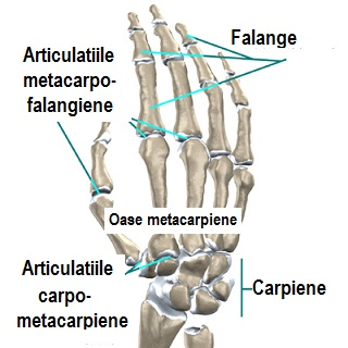 tratați articulația unei mâini care cade)
