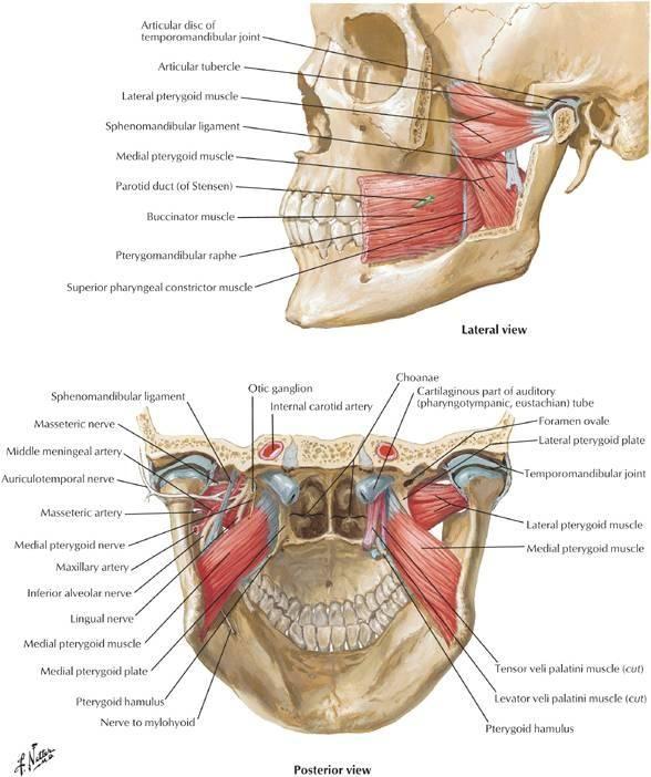 Terapia manual-posturală, o noutate pentru pacienții cu afecțiuni osteo-articulare în cadrul OCH