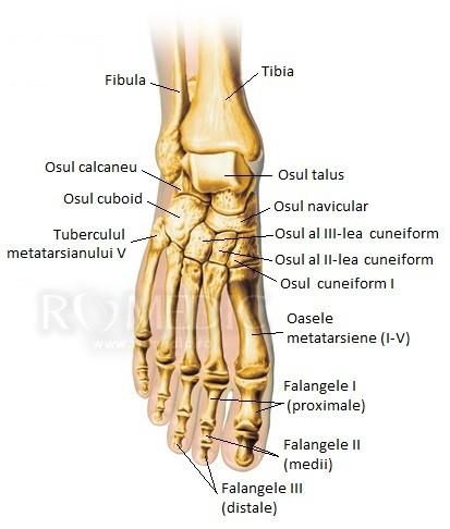 artrita juvenila a gleznei electromasaj pentru artroza genunchiului